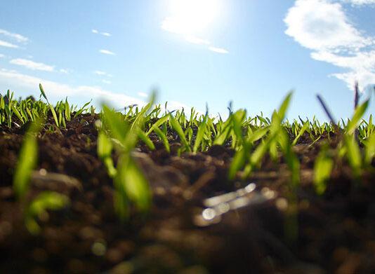 Co ma znaczenie przy wybieraniu rolniczych preparatów